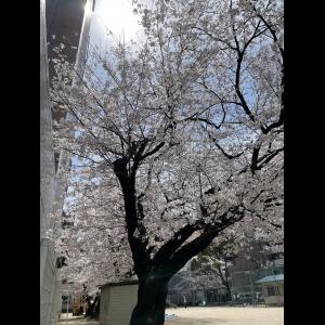 広島中区キックボクシングジム HADES WORK OUT GYM(ハーデスワークアウトジム) 最新情報:2021/04/03「広島キックボクシングハーデスジム体験」