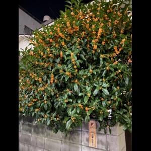 広島中区キックボクシングジム HADES WORK OUT GYM(ハーデスワークアウトジム) 最新情報:2020/03/19「広島キックボクシングハーデスジム体験」